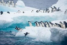 The Antarctic Continent